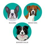 Short hair bulldog, boxer dog and border collie popular canine purebreds. In circles vector illustrations of puppies realistic heads faces isolated on white vector illustration
