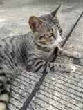 Short hair cat Stock Photos