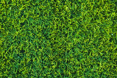 Short-haired lawn Stock Images