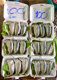 Short mackerel prepared as Pla Thu on polystyrene lunch box in Samut Songkhram Thailand Stock Images