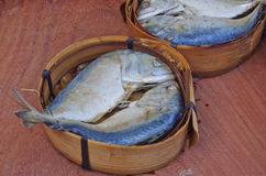 Short mackerel Royalty Free Stock Image