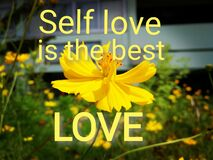 Free Short Message Says Self Love Is The Best Love On Yellow Cosmos Field. Royalty Free Stock Photography - 216518237