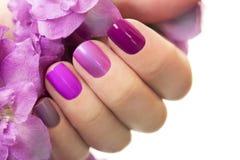 Short purple maroon manicure . Short purple maroon manicure on female hand close up on white background royalty free stock photos