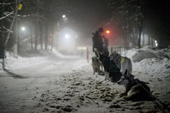 Short rest rides sled dogs in the night race Stock Images