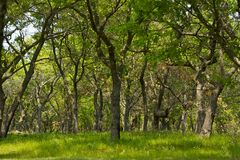 Short Trees Forest. In Beach State Park, Illinois, USA. Forest Landscape Stock Photo