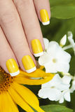 Short yellow French manicure. Short yellow French manicure with sunflower and white Phlox stock images