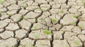 The shortage of water for agriculture. Royalty Free Stock Photography