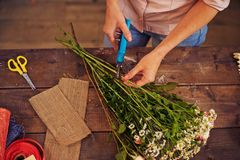 Shortening floral stems. Female florist cutting floral stems with secateurs Royalty Free Stock Images