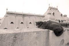 Кот британцев Shorthair вверх на крыше Стоковые Изображения