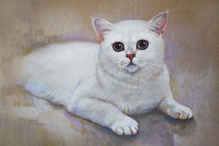 Shorthair de ingleses do gato da pintura fotos de stock