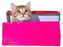 Shorthair getijgerd katje in een kleurrijke doos royalty-vrije stock fotografie