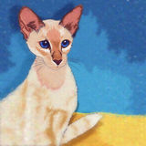 Shorthair oriental Cat Illustration libre illustration