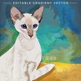 Shorthair oriental Cat Illustration Imagen de archivo