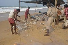 Shorting Fish Stock Image