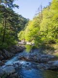 Shosenkyo峡谷以新绿色在甲府,山梨,日本 图库摄影