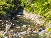Shosenkyo Gorge in fresh green in Kofu, Yamanashi, Japan Royalty Free Stock Photo