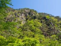 Shosenkyo Gorge in fresh green in Kofu, Yamanashi, Japan Royalty Free Stock Images