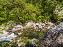 Shosenkyo Gorge in fresh green in Kofu, Yamanashi, Japan Stock Image