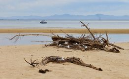 NESTING GULLS ON THE BEACH IN DRIFTWOOD. Shot in Abel Tasman National Park New Zealand. These seagulls shelter in a large driftwood formation after early morning stock image