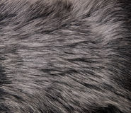 Shot of abstract fur background Stock Photo