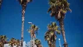 Sky view on palms in resort stock footage