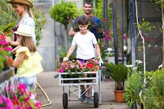 Shot of beautiful family working together in the greenhouse. Shot of beautiful boy and her father transporting flowers while girl with her mother watering royalty free stock image