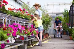 Shot of beautiful family working together in the greenhouse. Shot of beautiful boy and her father transporting flowers while girl with her mother watering stock image