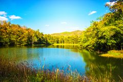 Tropical forest with small lake scene nature background. Shot of beautiful lake with tropical forest scene nature landscape background Stock Images