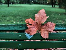 Shot of a bench with a heart sign and a red leaf stock photos