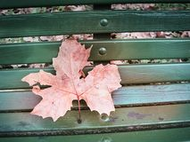 Shot of a bench with a red leaf royalty free stock photo
