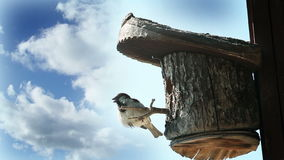 Shot of the bird in the tree house with the beautifull clouds behind it stock video footage