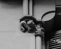 Peculiar male mermaid. Shot in black and white detail on the sculpture on the facade of this historic building representing some characters / animals / plants Stock Photo
