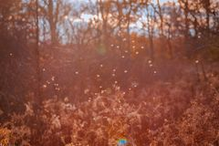 Shot of bugs flying over some plants at sunset. During the fall royalty free stock photos