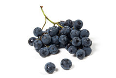 A shot of a bunch of black grapes. Stock Images