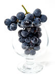A shot of a bunch of black grapes. A shot of a bunch of black grapes in the vine glass Royalty Free Stock Photo