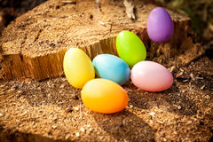 Shot of colorful easter eggs on wooden stump Royalty Free Stock Image
