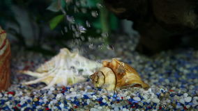 Shot of a colorful golden fish enjoying in the aquarium. Home environment stock footage