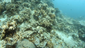 A shot of a coral reef underwater with fishes. A full shot of a coral reef. Shot moves forward to show a large area of a coral reef stock video footage