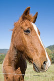 Shot of a Cute Horse against Blue Sky Royalty Free Stock Photo
