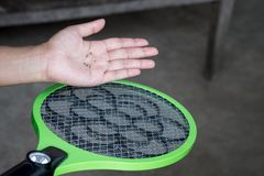 Shot of dead mosquito. Stock Photography