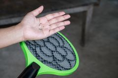 Shot of dead mosquito. Royalty Free Stock Image