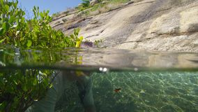 A diver coming out of mangroves. A shot of a diver coming out of healthy ang green mangroves stock footage