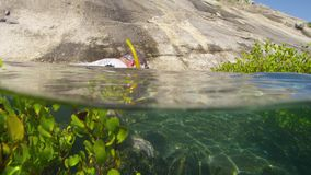 A diver swims past the mangroves. A shot of a diver with a snorkeling mask, swims past through the mangroves stock footage