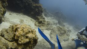 Diver chilling under the sea. A shot of a diver under the sea while sitting on the ocean floor and making bubbles from his diving mask stock video footage