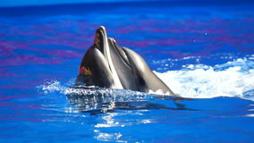 A Shot Of Dolphins Swimming Around stock footage