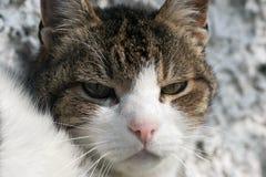 Sullen cat Stock Image