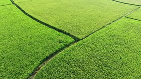 Aerial View of Paddy Field from Dongshan Township, Yilan, Taiwan. stock video footage