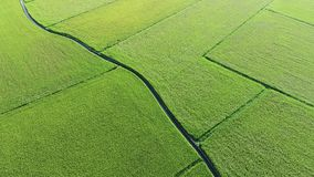Aerial View of Paddy Field from Dongshan Township, Yilan, Taiwan. stock video
