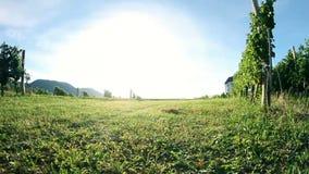 Shot of driving through the wineyard grass stock video