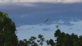 A shot of eagles flying